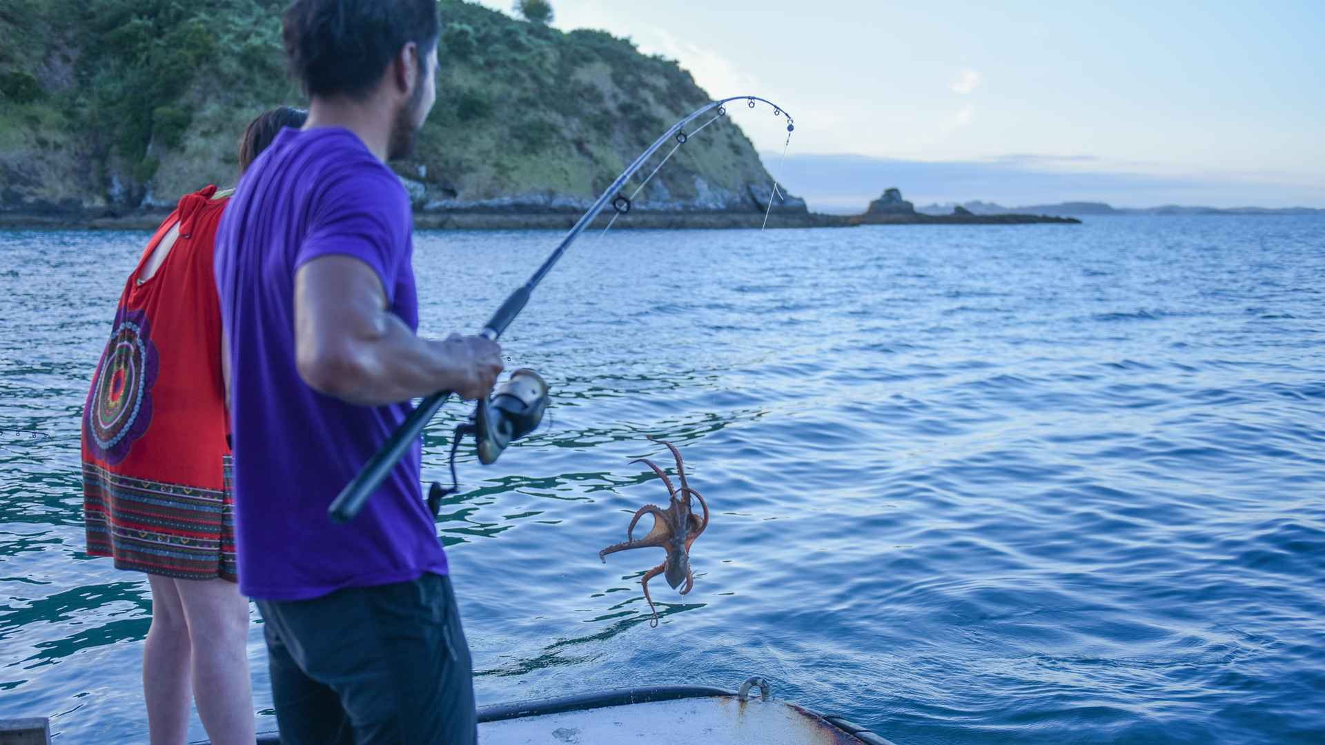 octopus sighting in the bay of islands
