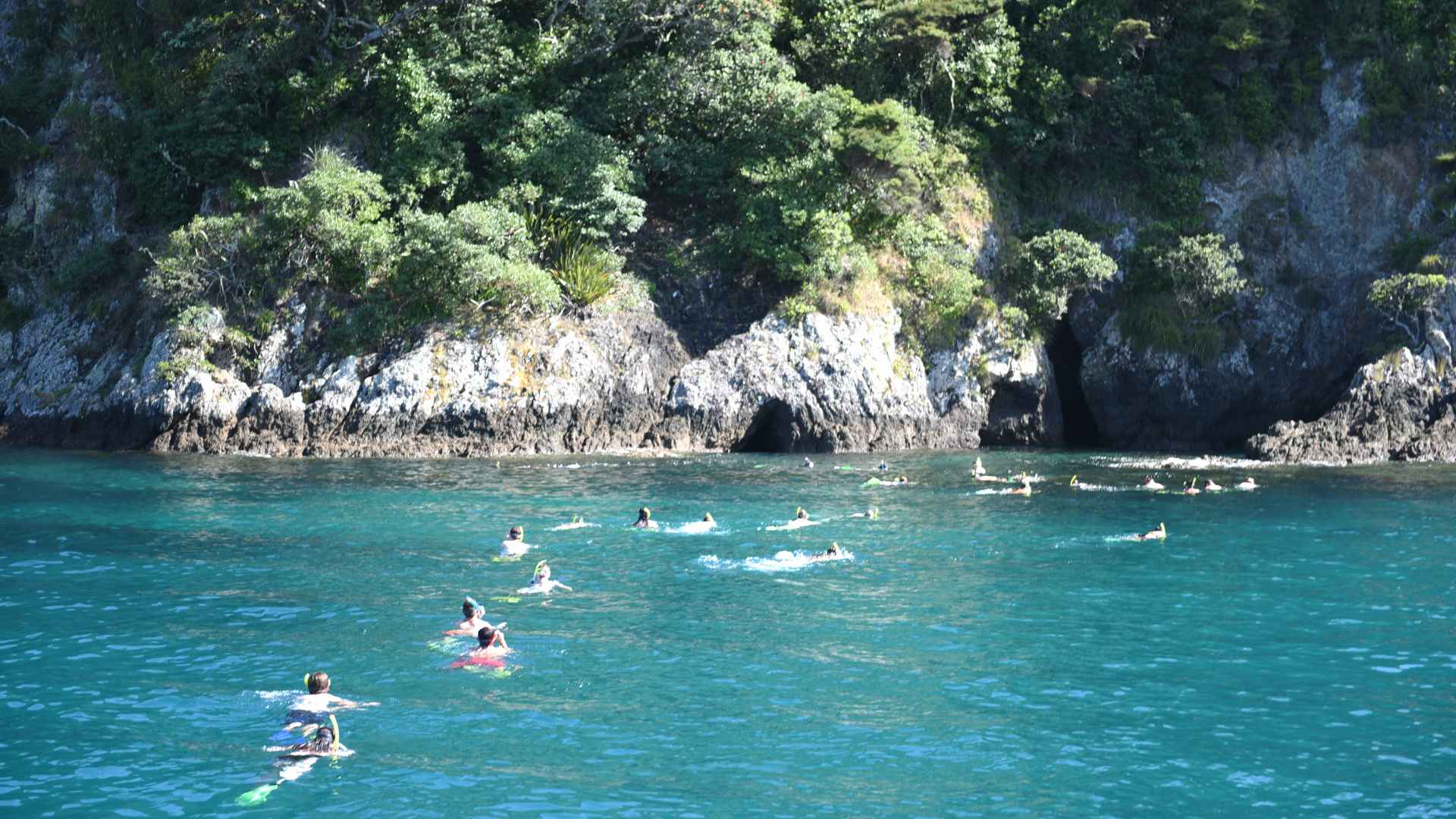 group snorkeling in the bay of islands