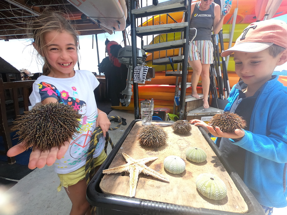 kids enjoying kina shell in the rock adventure cruise new zealand