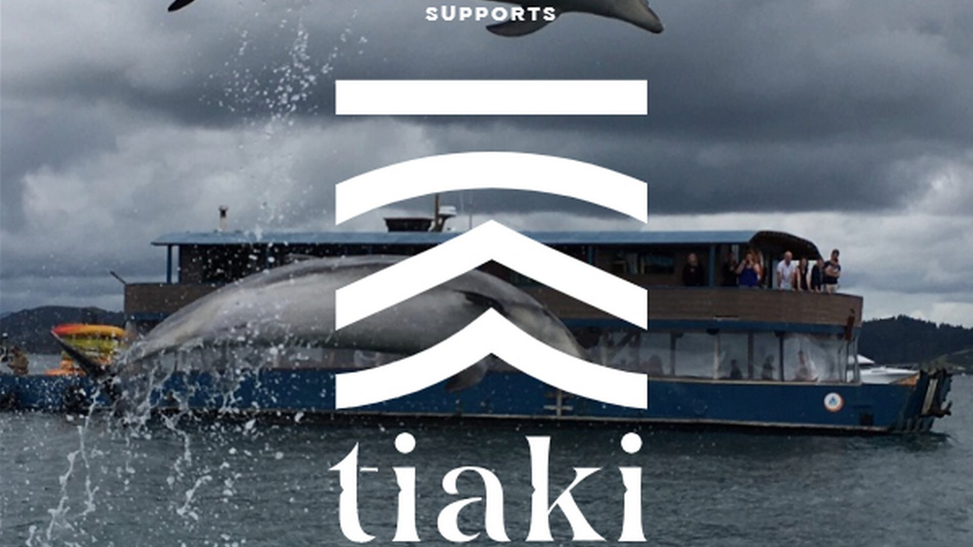 Our Bay of Islands Dolphins are jumping for joy that The Rock has joined the Tiaki Promise